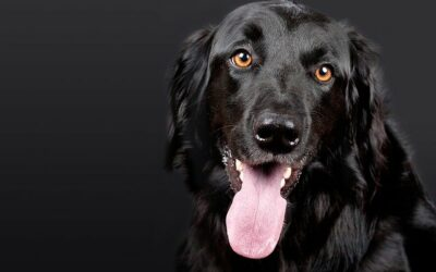 Consistency: The Key to Overcoming Canine Anxiety