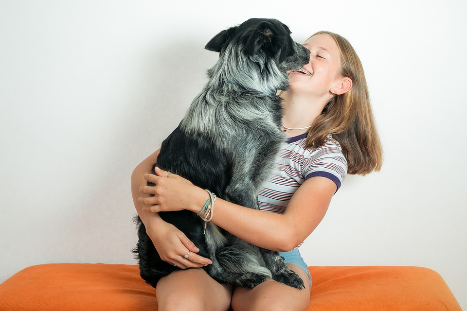 3 Tips to Housetrain Your Dog